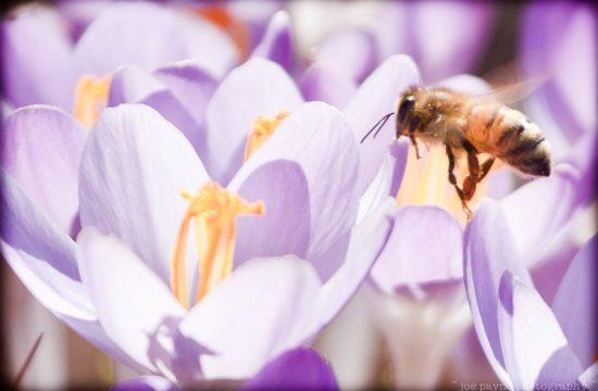 spring at the ima