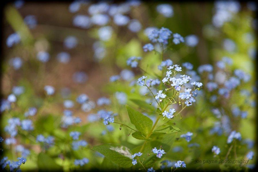 Gardens-14