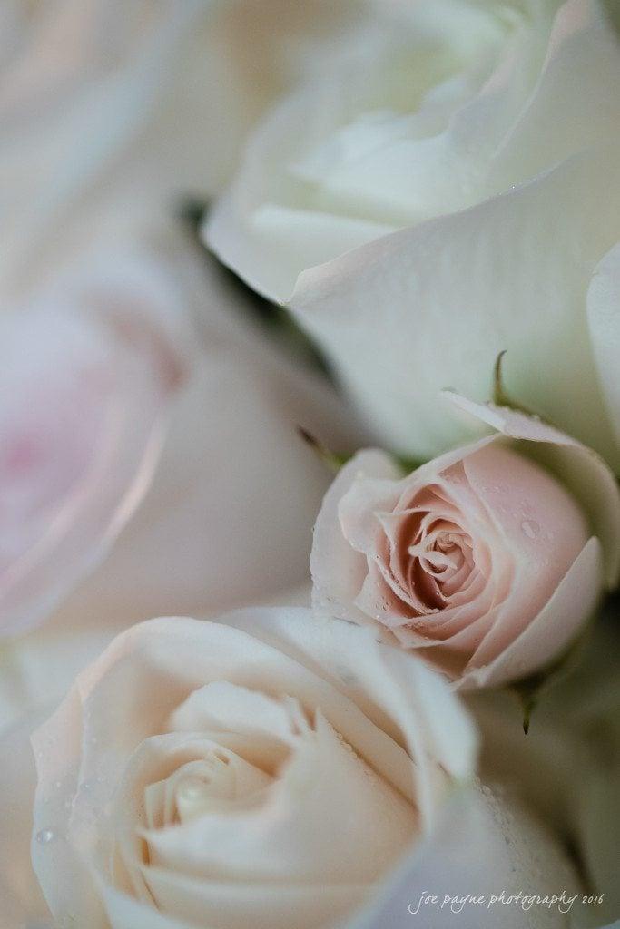 Charlotte Wedding Photographer - R&C-5